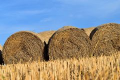 Round bundle of straw. Rural landscape with agricultural fields. The field is harvested. Sun is shining. Stock Images