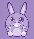Round bunny Royalty Free Stock Photo
