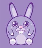 Round bunny Royalty Free Stock Photo
