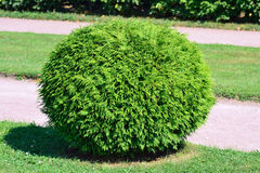Round bush stock photography