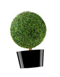 Round bush isolated Royalty Free Stock Photo