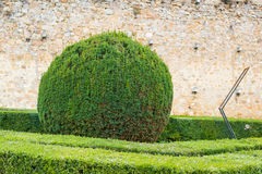 Round bush in a Tuscan garden Stock Images