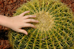 Round Cactus Royalty Free Stock Photos