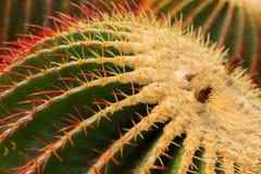 Round cactus stock image