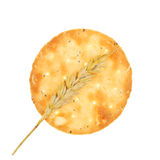 Round cheese biscuit and wheat Stock Image