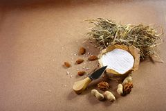 Round cheese camembert or brie wrapped in paper with Cheese Serving Knife, nuts and hay. Light wooden background. Milk production. stock photos