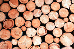 Round chopped firewood Stock Images