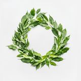 Round circle frame made of green branches and leaves on white background. Flat lay, top view royalty free stock images