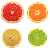 Round citrus fruit slices Stock Photography