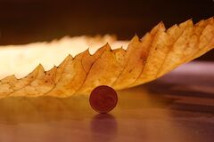 Round Coin Beside Yellow Leaf Royalty Free Stock Photography