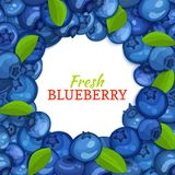 Round colored frame composed of blueberry and leaves. Vector card illustration. Blue berry fresh and juicy bilberry Royalty Free Stock Photos