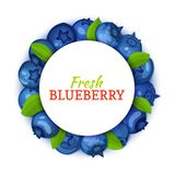 Round colored frame composed of delicious blueberry fruit. Vector card illustration. Blue bilberry fresh and juicy Stock Photography