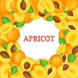 Round colored frame composed of delicious juicy apricot fruit. Vector card illustration. Circle apricots frame. Ripe Royalty Free Stock Image