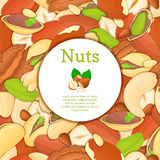 Round colored frame composed of different nuts brazil, cashew, peanut, pecan, pine, pistachio. Vector card illustration Stock Image