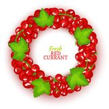 Round colored frame composed of red currant. Vector card illustration. Fruit label. Circle currant berries fruit and. Leaves for packaging design of healthy Royalty Free Stock Photos
