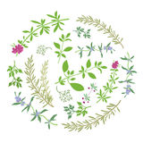 Round Composition With Aromatic Herbs Stock Images