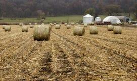 Round corn bales Stock Images