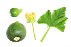 Round courgettes. Isolated against white background Stock Image