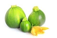 Round courgettes Royalty Free Stock Images