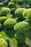 Round cown trees Royalty Free Stock Image