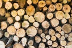 Round cut alder logs stacked in storage and ready for chopping lumberjack with axe on firewood for heating house in forest. Concep. T background for outdoor Royalty Free Stock Photo