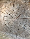 Round cut down tree with annual rings stock images