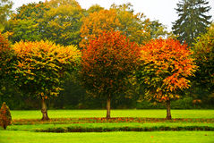 Round-Cut Trees in Autumn Stock Photo
