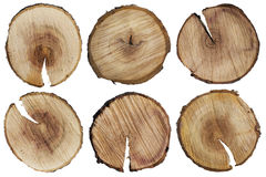 Round cuts of a tree trunk Stock Images