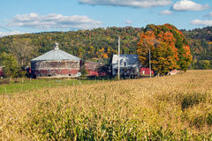 Round Dairy Barn and Corn Field Royalty Free Stock Photos