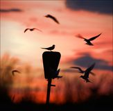 Round dance at a dawn. Terns against colourful a sky dawn turn a round dance Royalty Free Stock Images