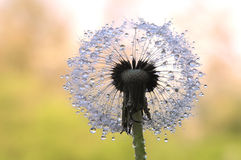 Round dandelion seed royalty free stock photography
