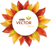 Round design of autumnal leaves Stock Photos