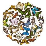 Round design with colored papilio ulysses, morpho menelaus, graphium androcles, morpho rhetenor cacica, papilio demoleus