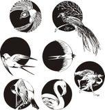 Round designs with birds Royalty Free Stock Photos