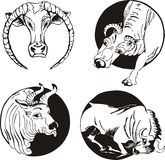 Round designs with bulls Stock Photo