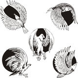 Round designs with eagles and falcons Stock Photography