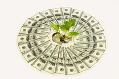 In the round of dollars Royalty Free Stock Photos