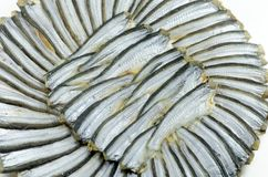 Round dried  fishes. Stock Image
