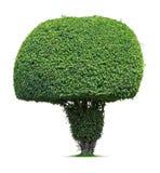 Round drzewo Fotografia Stock