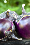 Round eggplants Royalty Free Stock Photos