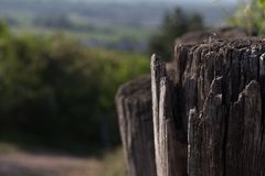 Old wooden fence in forest royalty free stock images