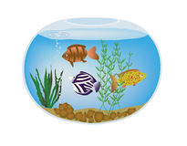 Fishbowl. Round fishbowl with exotic colorful fish and seaweed Royalty Free Stock Images