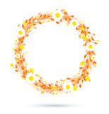 Round floral daisy pattern Stock Photos
