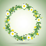 Round floral daisy pattern Stock Images