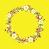 Round floral daisy pattern Royalty Free Stock Images
