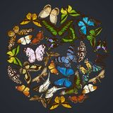 Round floral design on dark background with papilio ulysses, morpho menelaus, graphium androcles, morpho rhetenor cacica