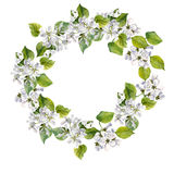 Round floral frame with apple tree flowers Stock Photo
