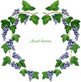 Round floral frame with black currants branches Stock Photo