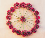 Round floral pattern of wild flowers of Allium to pink retro background Royalty Free Stock Image