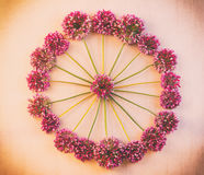 Round floral pattern of wild flowers of Allium to pink retro background with vignette Royalty Free Stock Images